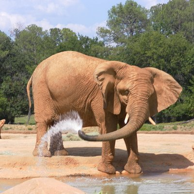 This elephant put on quite a water show.