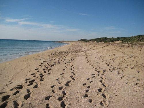 Spiaggia con strato di conchigli