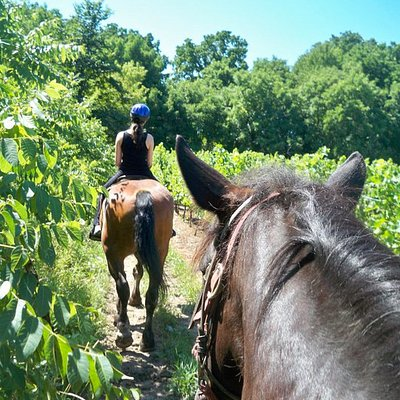 on the trail next to a vineyard