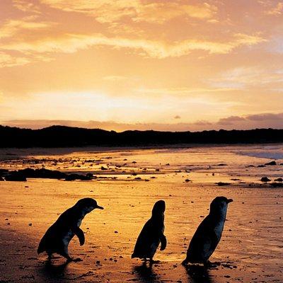 Cape Woolamai @ Phillip Island Nature Parks