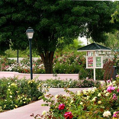 The Rose Garden at MCC