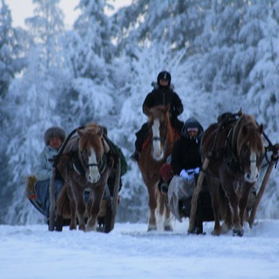 Sleigh Ride and riding trip in the winter