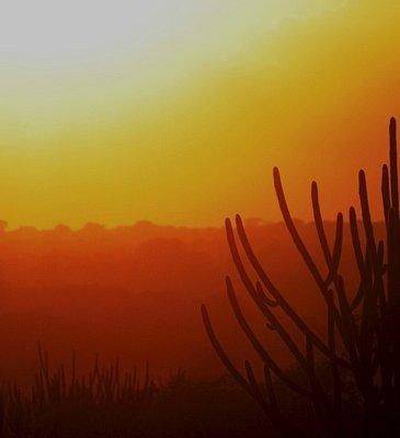 Cactus by Francisco Diniz