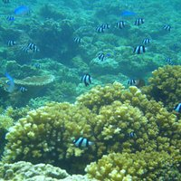 Under water world at Palolo Deep Marine Reserve