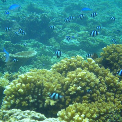 Under water world at Palolo Deep Marine Reserve