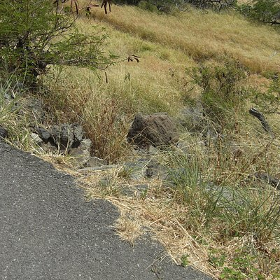 舗装道から石伝いに小道へ降りる