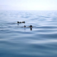 Alcuni tursiopi si avvicinano al catamarano