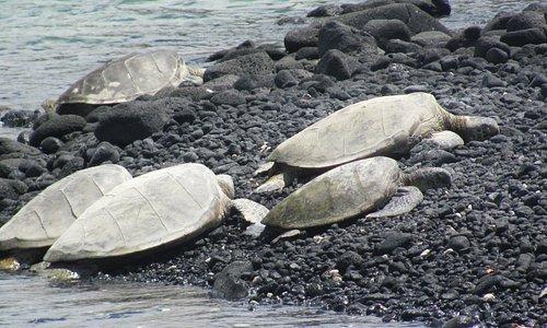 Turtles basking in the sun