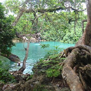 Large old trees surround the swimming hole