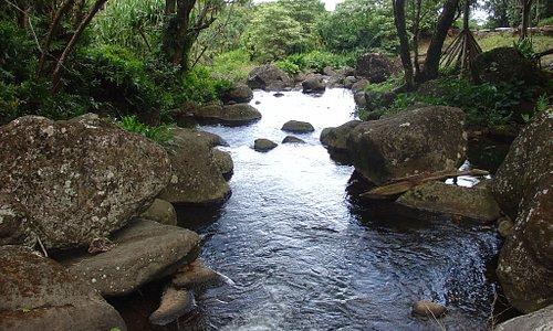 Limahuli has one of the last remaining pristine streams