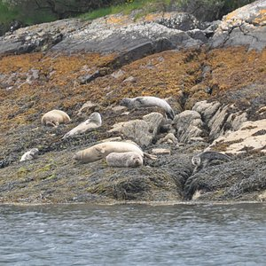 Some of the seals we saw on the trip.