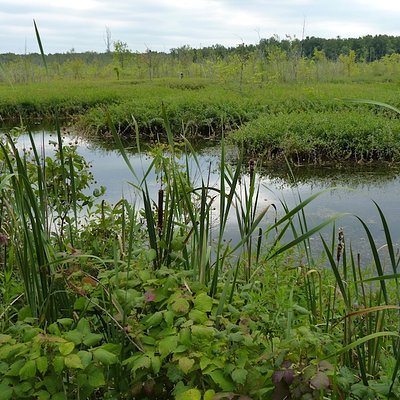View of swamp from Onondaga Nature Trail in late August.