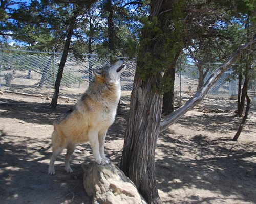 One of the wolves -check out their website