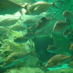 Aquarium 63 SeaWorldその2