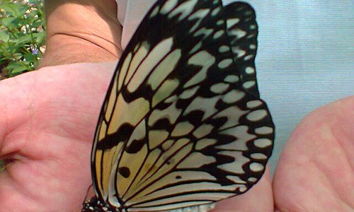 Friendly Butterflies