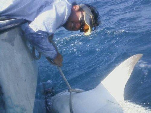 Shark Charters! all Summer!