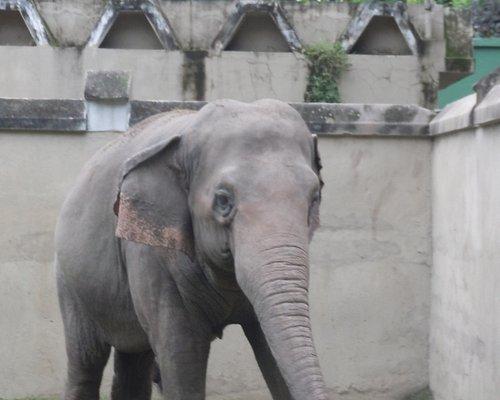 elefante triste