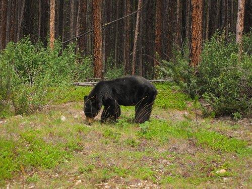 bear at side of road