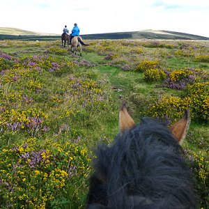 Riding on the moor