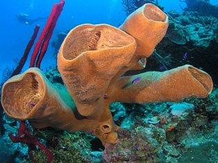 Scuba Dive Belize!