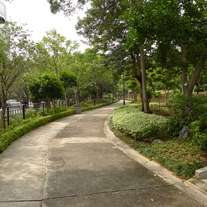 Nature walk area in Sha Tin Park