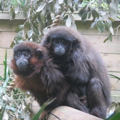 More friendly monkeys (by the steep slope)