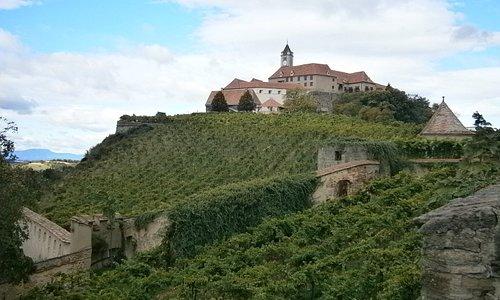 vineyards surrounding the castle