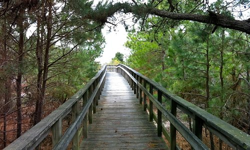 One of the boarded walks to the bluffs over the Chesapeake Bay