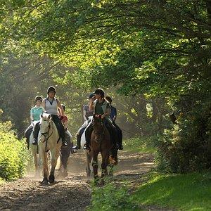 Horse RIding on WImbledon Common