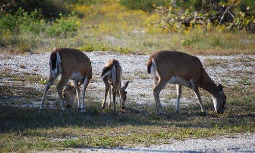 Several along Key Deer Blvd
