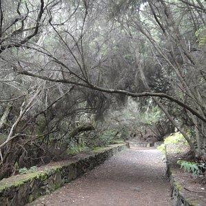 La Zarza forest