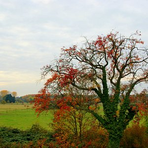 wunderbare Herbstfärbung