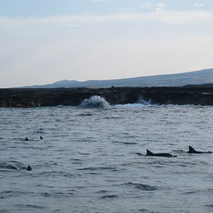 seeing the dophins
