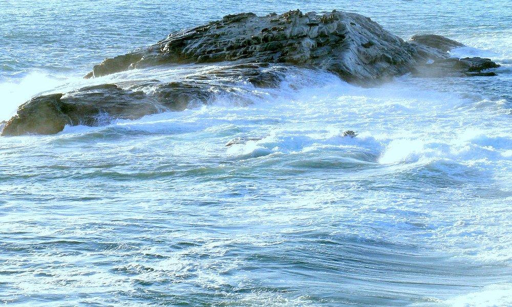 L'oceano e le otarie al sole sullo scoglio