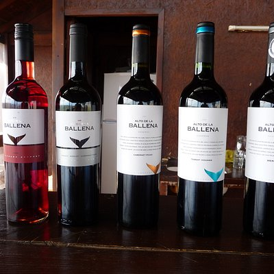 The Five Selected Wines