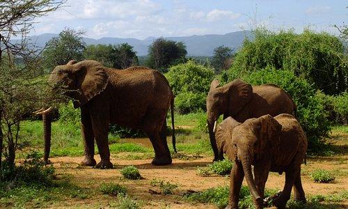 Elephants Samburu