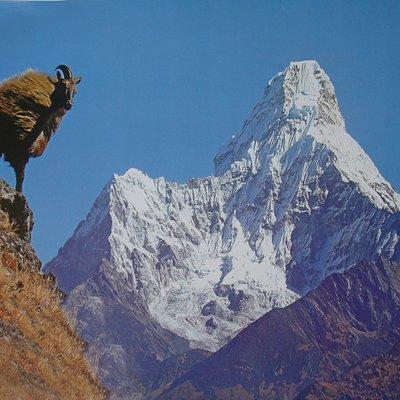 Mountain Tar