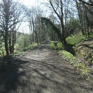 Railway Line near Cloughton