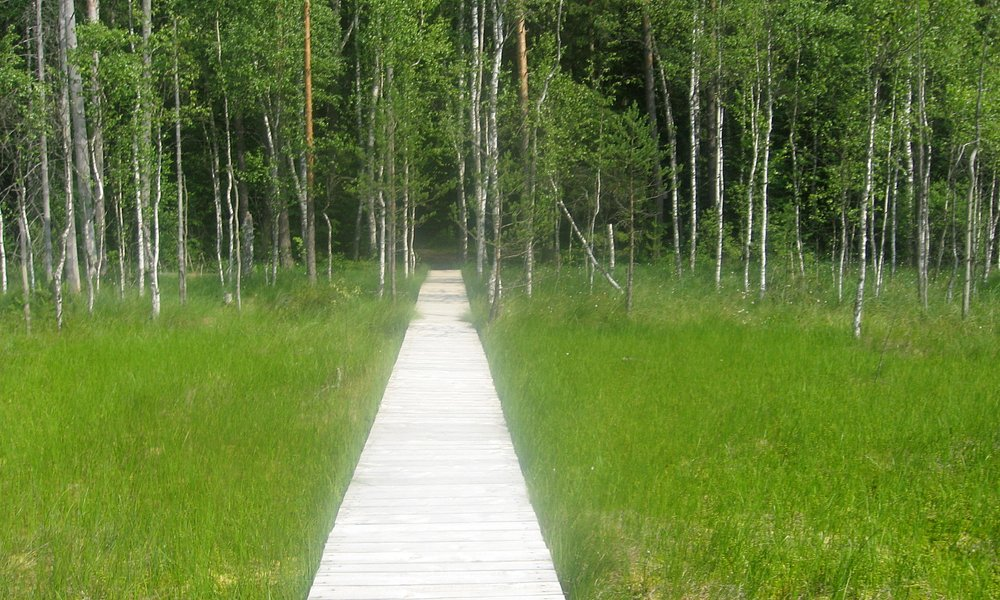raised boardwalk onto the swamp