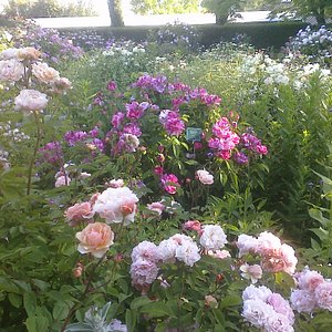 Der ´Alte Rosengarten`