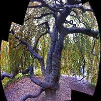 sweethearts tree alongside the sniper memorial bridge inside the park complex