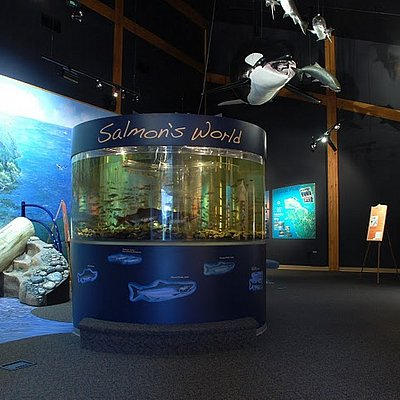 Salmon's World