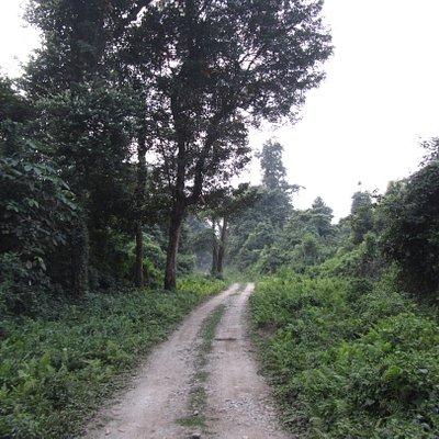 Inside - Chapramari Forest