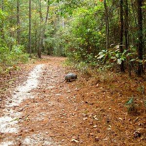 Armadillo crossing trail