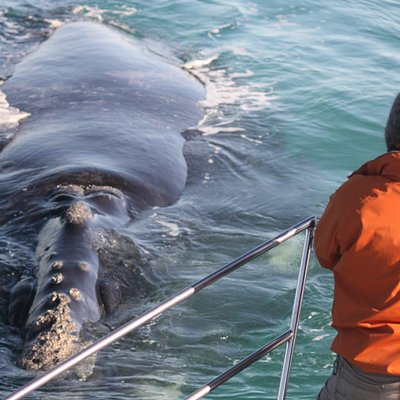 A close approach by a Southern right whale