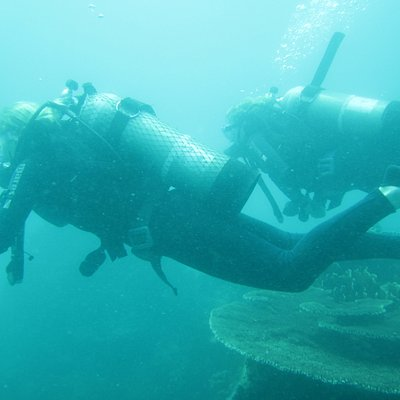 During the dive