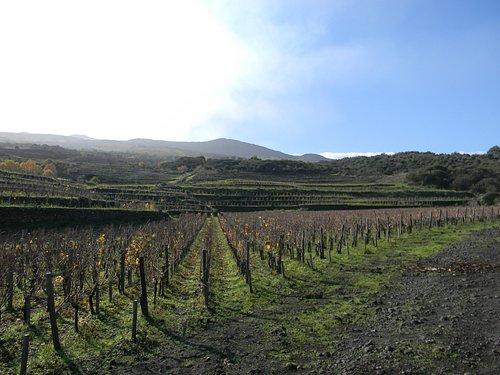 Passopisciaro - main vineyard