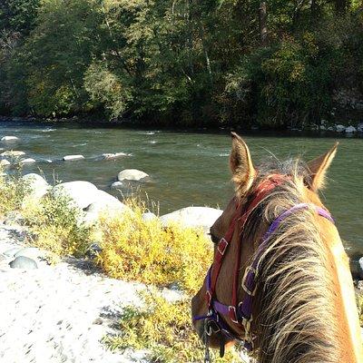November 2011 at the Hood River beach ride