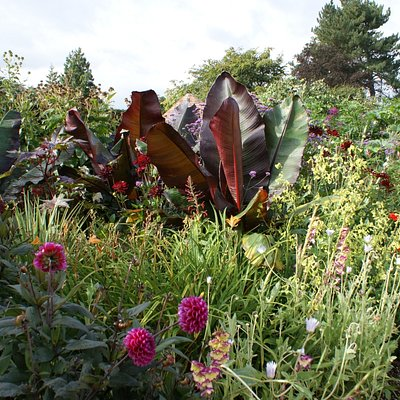 The Exotic Garden at Abbeywood