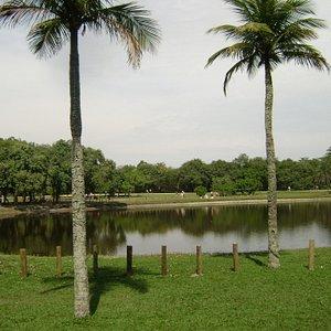 Lago do bosque